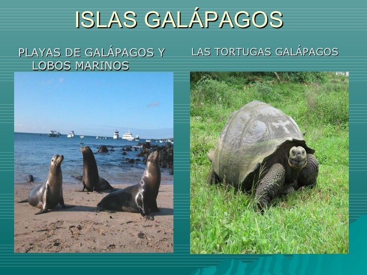 ISLAS GALÁPAGOS <ul><li>PLAYAS DE GALÁPAGOS Y LOBOS MARINOS </li></ul><ul><li>LAS TORTUGAS GALÁPAGOS </li></ul>