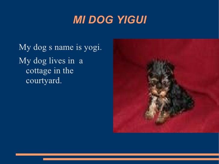 MI DOG YIGUI <ul><li>My dog s name is yogi.