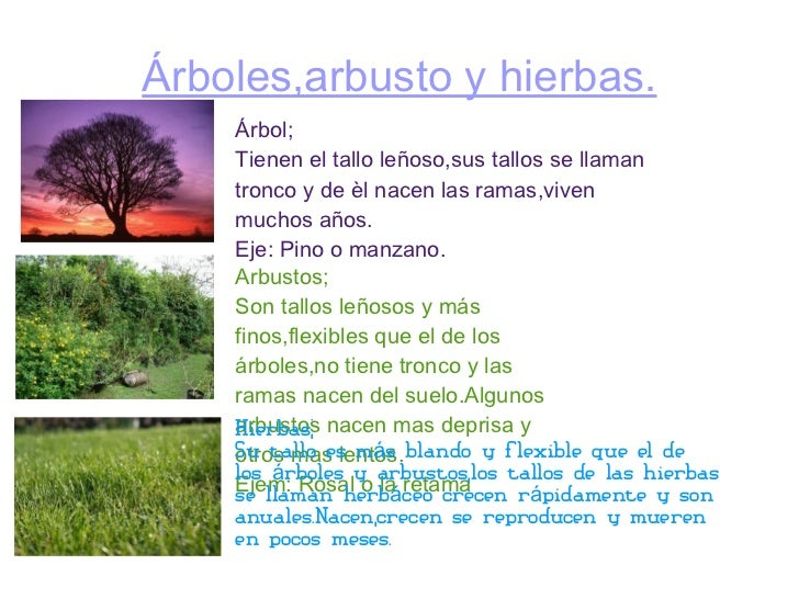 Mi presentacion jessica martinez lopez las plantas - Nombres de arbustos ...