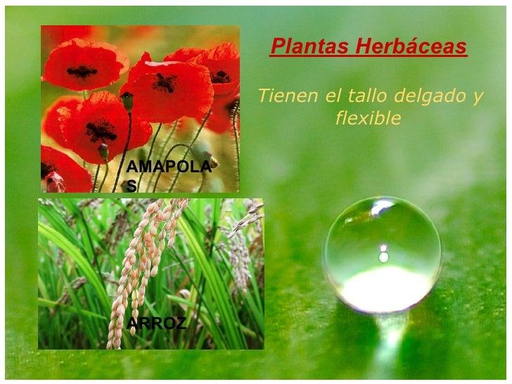 Mi Presentacion Plantas