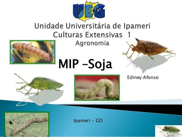 MIP –Soja Ediney Afonso Ipameri - GO
