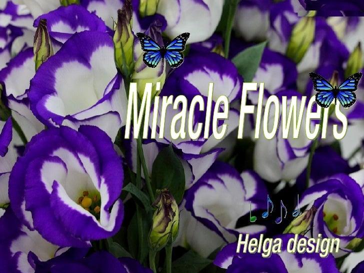 Helga design Miracle Flowers