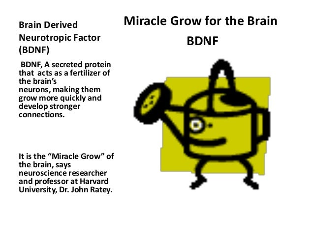 Image result for miracle-gro for the brain