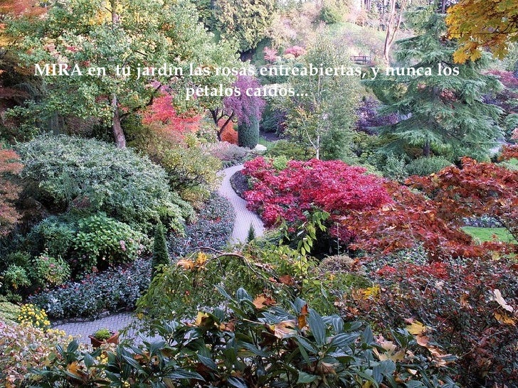 MIRA en  tu jardín las rosas entreabiertas, y nunca los pétalos caídos ...