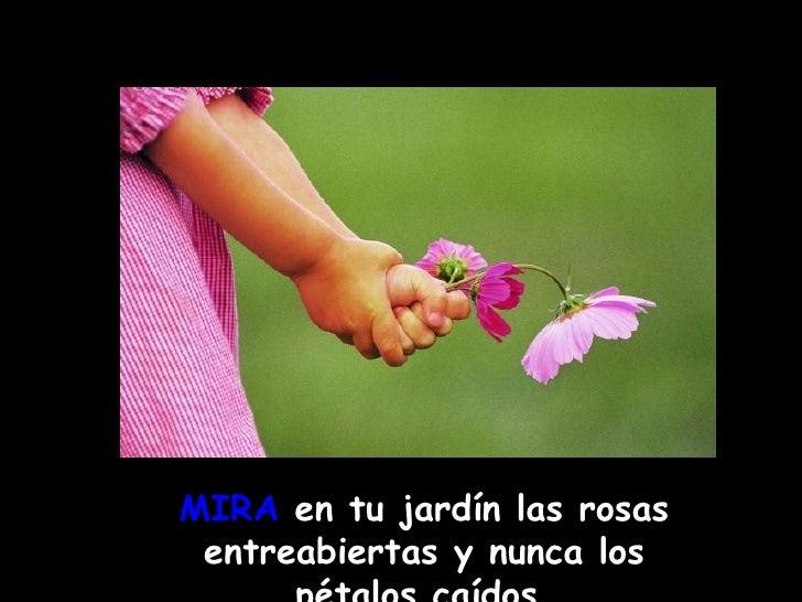 MIRA  en tu jardín las rosas entreabiertas y nunca los pétalos caídos .