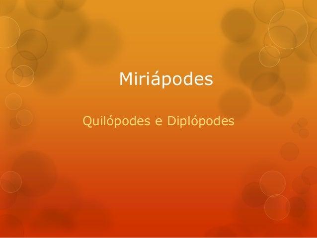 Miriápodes Quilópodes e Diplópodes