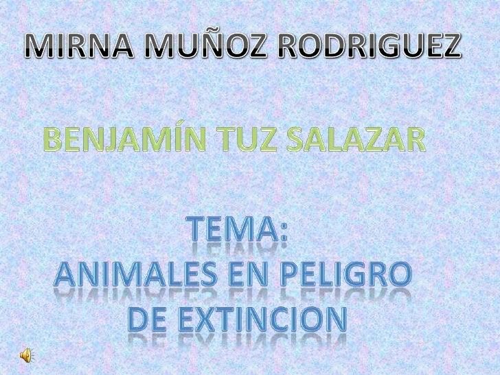 MIRNA MUÑOZ RODRIGUEZ<br />BENJAMÍN TUZ SALAZAR<br />TEMA:<br />ANIMALES EN PELIGRO <br />DE EXTINCION<br />