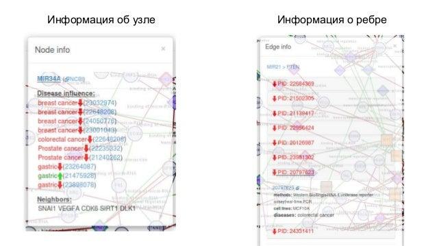 Информация о генной сети