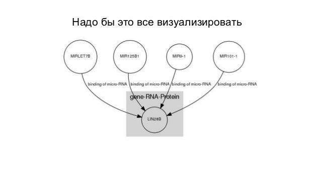 Генная сеть TP53 на GraphViz