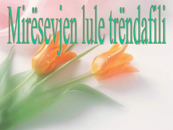 Mirësevjen lule trëndafili