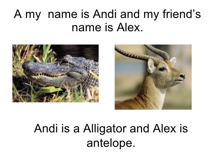 A my  name is Andi and my friend's name is Alex. Andi is a Alligator and Alex is antelope.