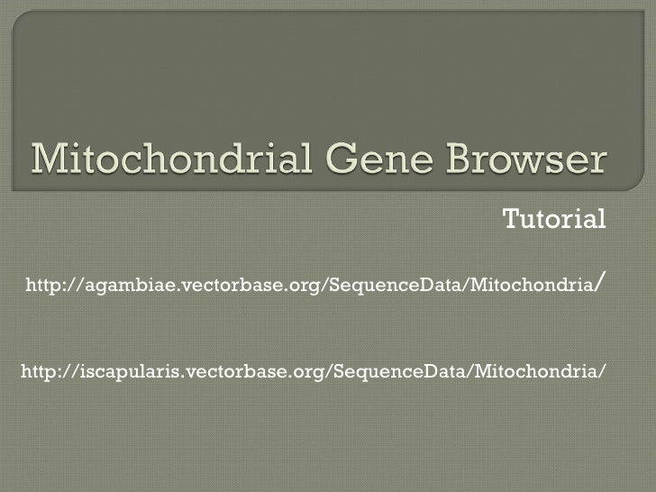Tutorial http://agambiae.vectorbase.org/SequenceData/Mitochondria / http://iscapularis.vectorbase.org/SequenceData/Mitocho...