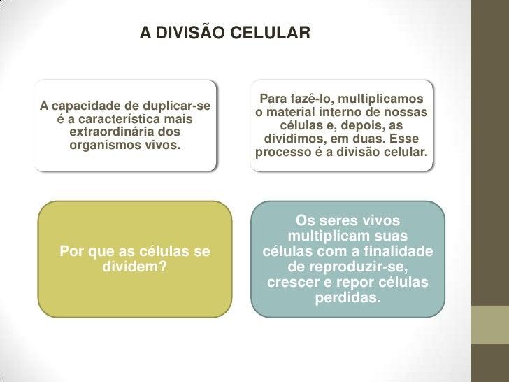A DIVISÃO CELULAR<br />