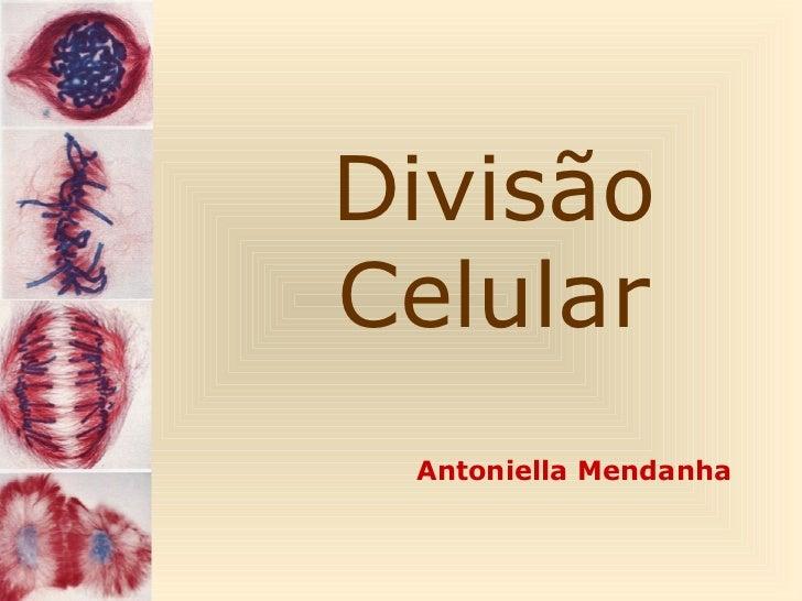 DivisãoCelular Antoniella Mendanha