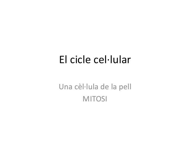 El cicle cel·lularUna cèl·lula de la pellMITOSI
