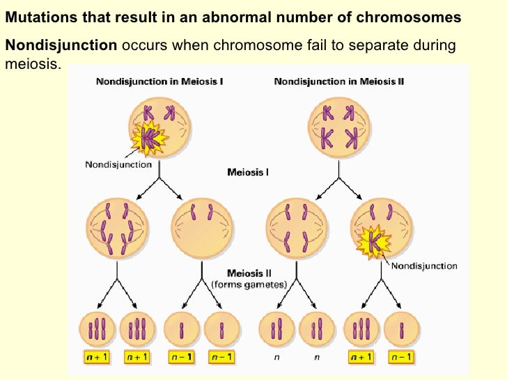 Diagram Of Mitosis And Meiosis With Mutation Diy Enthusiasts