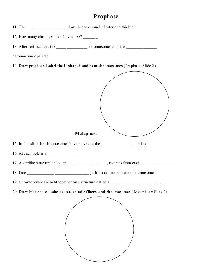 Worksheets Chromosome Worksheet mitosis activity worksheet zygote slide 1 2