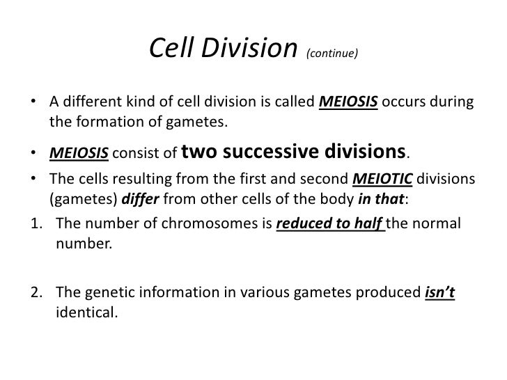 Mitosis And Meiosis – Mitosis Notes Worksheet