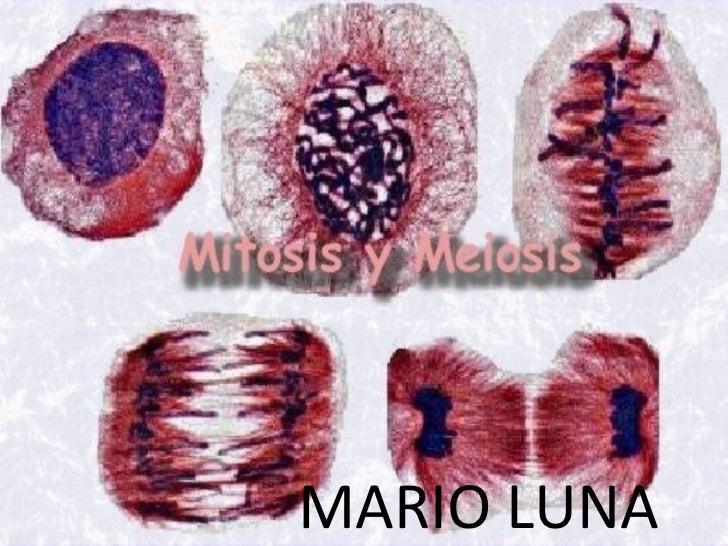 MARIO LUNA