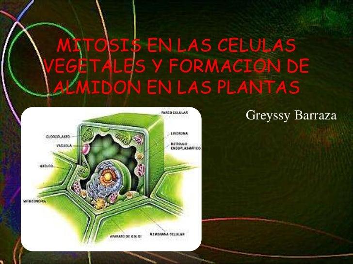 MITOSIS EN LAS CELULASVEGETALES Y FORMACION DE ALMIDON EN LAS PLANTAS                  Greyssy Barraza