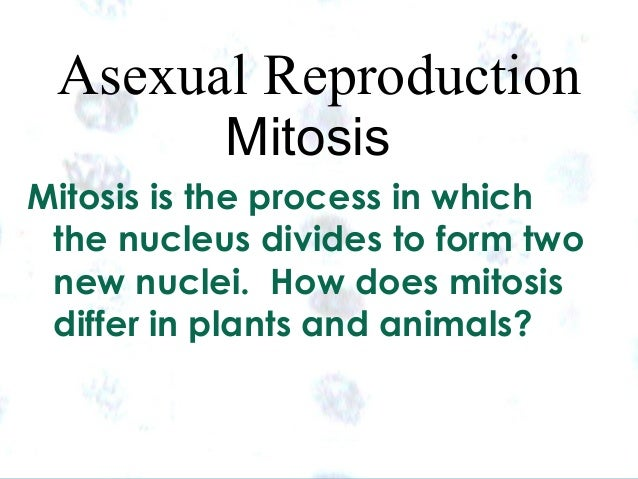Why is mitosis a form of asexual reproduction images 30