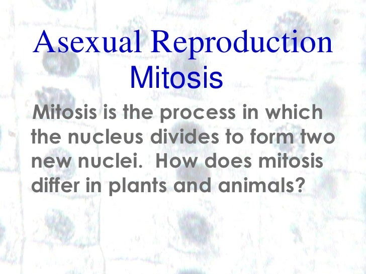 Asexual Reproduction           Mitosis Mitosis is the process in which the nucleus divides to form two new nuclei. How doe...