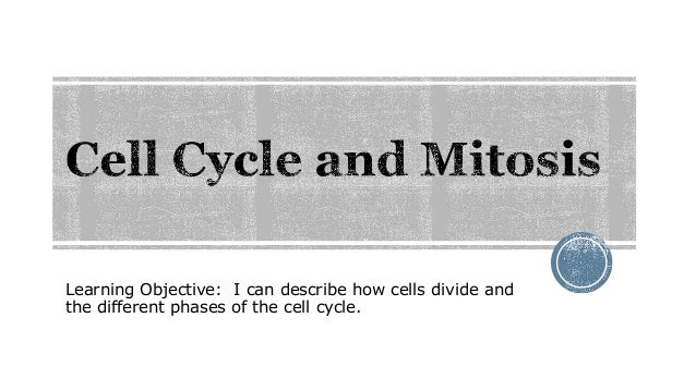 Learning Objective: I can describe how cells divide and the different phases of the cell cycle.