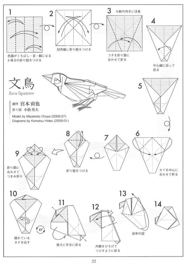 miyamoto chuya java sparrow