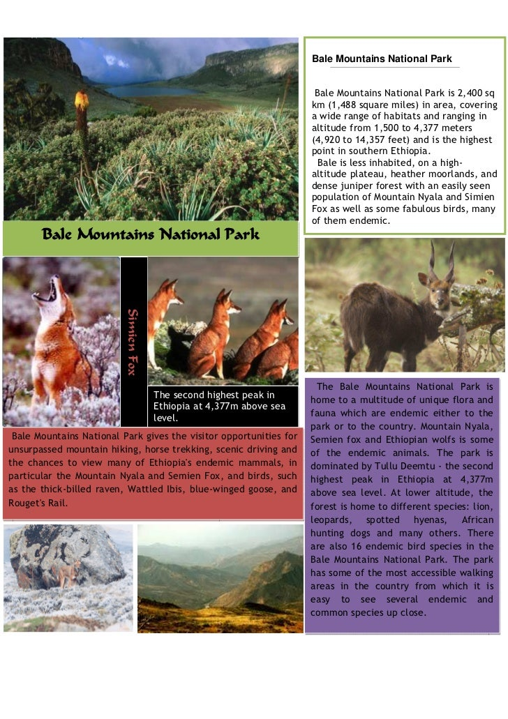 Bale Mountains National Park                                                                       Bale Mountains National...