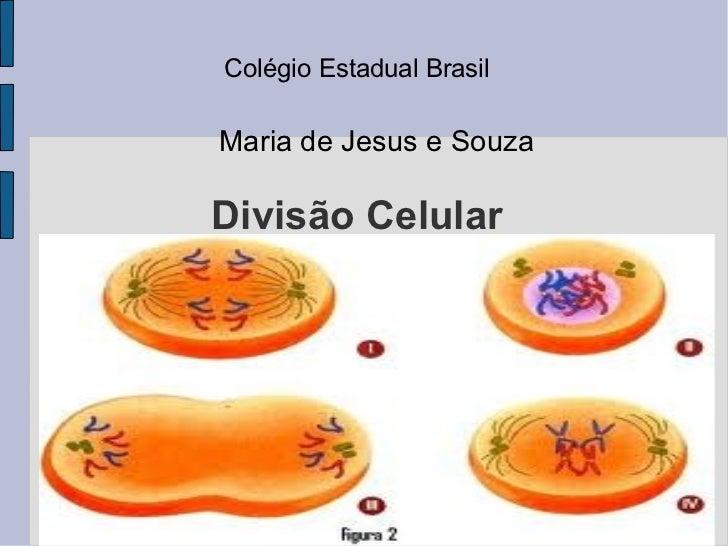 Colégio Estadual BrasilMaria de Jesus e SouzaDivisão Celular     Mitose