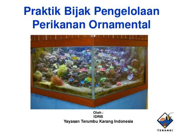 Praktik Bijak PengelolaanPerikanan OrnamentalOleh :IDRISYayasan Terumbu Karang Indonesia
