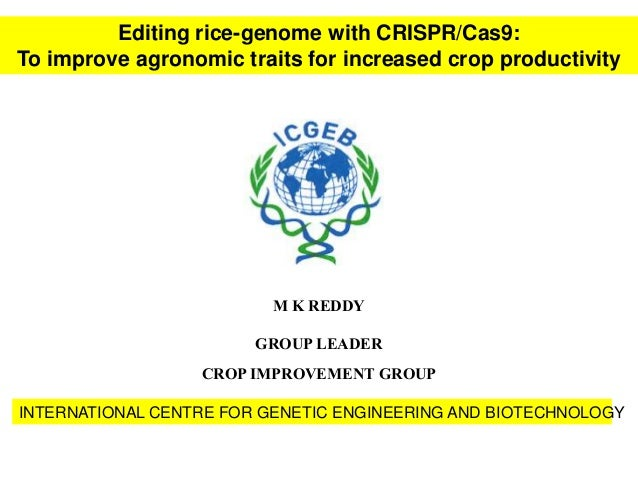 M K REDDY GROUP LEADER CROP IMPROVEMENT GROUP INTERNATIONAL CENTRE FOR GENETIC ENGINEERING AND BIOTECHNOLOGY Editing rice-...