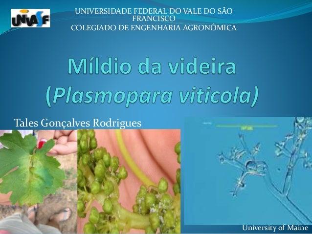 Tales Gonçalves Rodrigues UNIVERSIDADE FEDERAL DO VALE DO SÃO FRANCISCO COLEGIADO DE ENGENHARIA AGRONÔMICA University of M...
