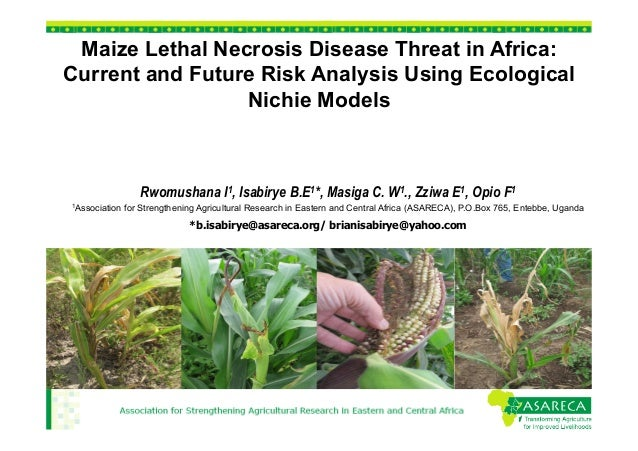 Maize Lethal Necrosis Disease Threat in Africa: Current and Future Risk Analysis Using Ecological Nichie Models  Rwomushan...