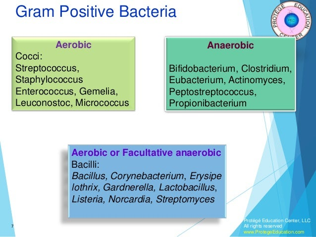 an overview of the bacteria mycobacteruim leprae Leprosy is caused by acid fast bacilli called mycobacterium leprae (m leprae), it  is an  as the bacilli multiply, bacterial load increases in the body and infection is   between these two polar forms (see annexure no iv for an overview of ridley.