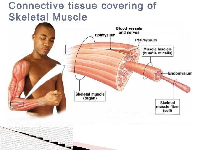 General principles of skeletal muscle