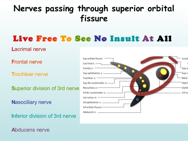 Mnemonics of Ophthalmology