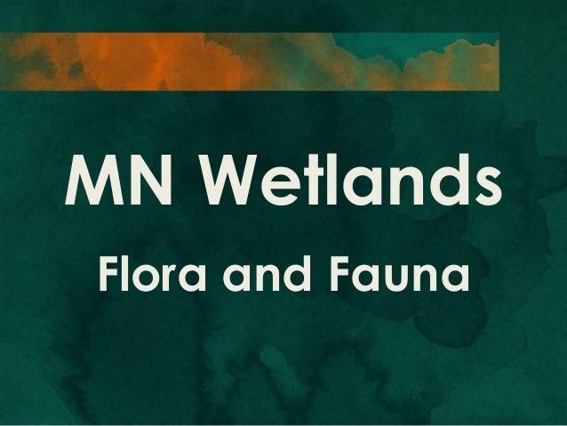 MN Wetlands Flora and Fauna
