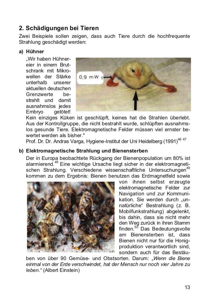 2. Schädigungen bei TierenZwei Beispiele sollen zeigen, dass auch Tiere durch die hochfrequenteStrahlung geschädigt werden...