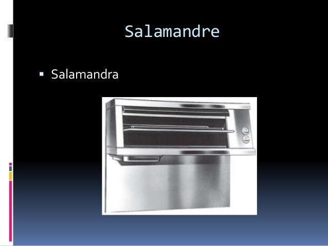 Salamandre  Salamandra