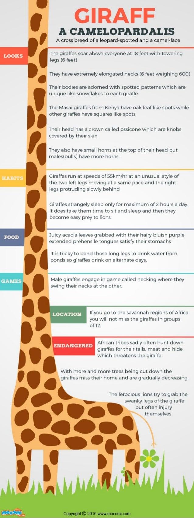 Giraffe Facts and Information – Mocomi Kids