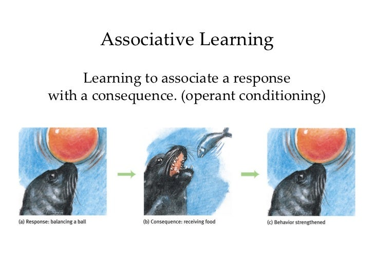 associative learning Even though motor skills vary widely in type and complexity, the learning process that individuals go through when acquiring various motor skills is similar paul fitts (1964 fitts & posner, 1967) has proposed three stages (or phases) of learning: the cognitive, associative, and autonomous stages.