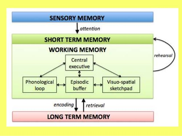 """a comparison between long term memory and short term memory Long-term memory is a vast store of knowledge and  one difference between  the term """"short-term."""