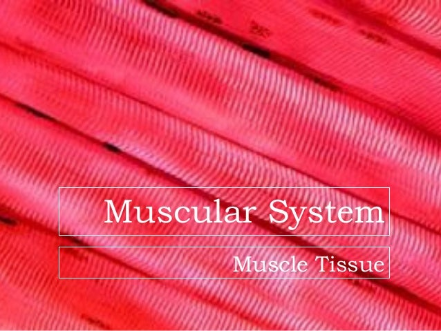 Muscular System      Muscle Tissue