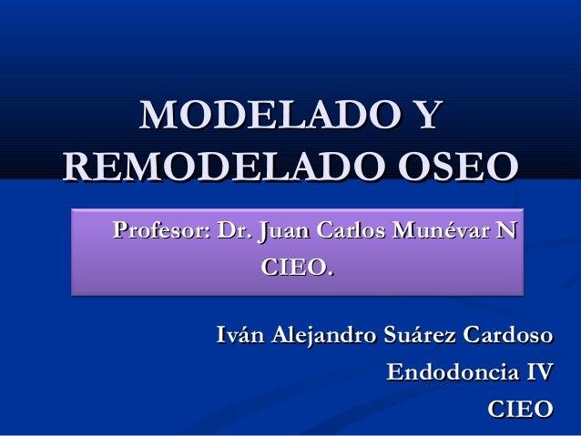 MODELADO YREMODELADO OSEO Profesor: Dr. Juan Carlos Munévar N               CIEO.         Iván Alejandro Suárez Cardoso   ...