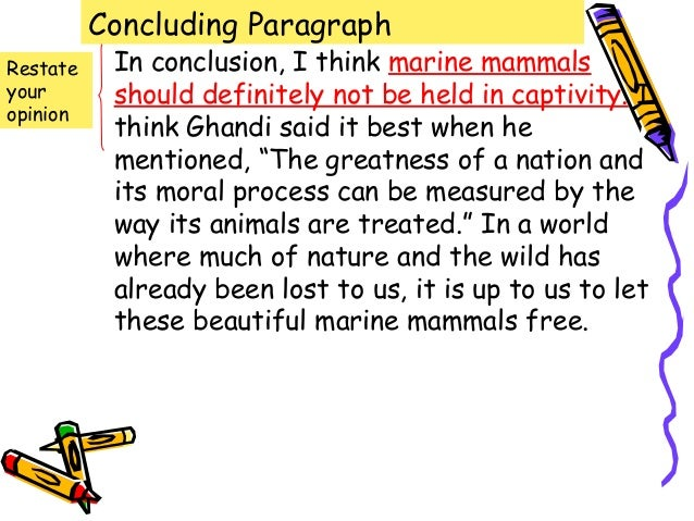marine mammals essay Be an educated consumer clearly it will take dedicated public effort to protect marine mammals and their habitat from the many what you can do for marine life.
