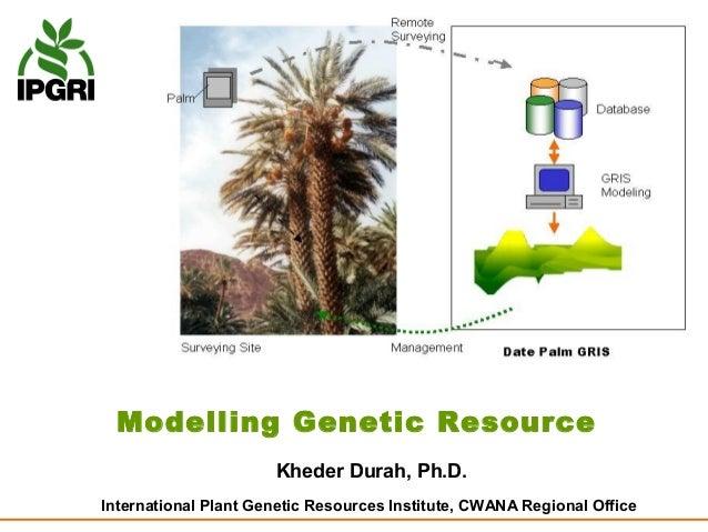 Modelling Genetic Resource                      Kheder Durah, Ph.D.International Plant Genetic Resources Institute, CWANA ...