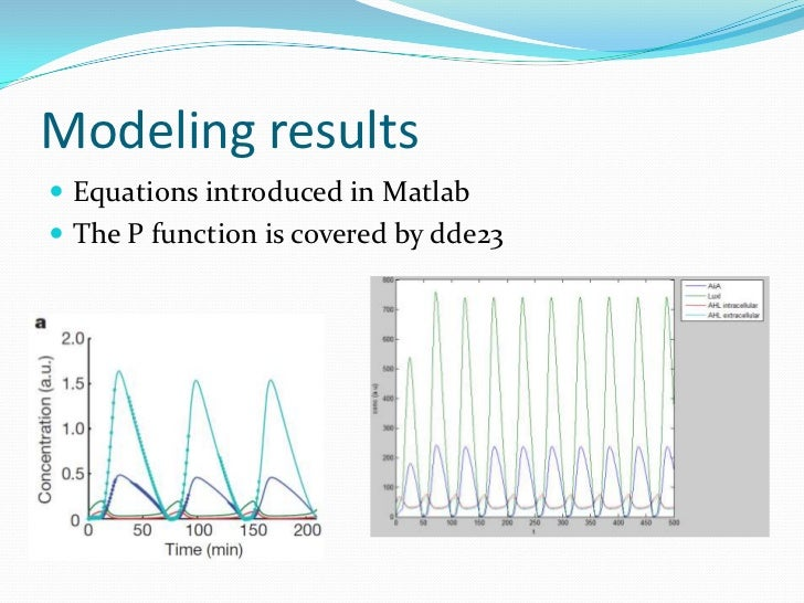 Modelling a synthetic genetic oscillator
