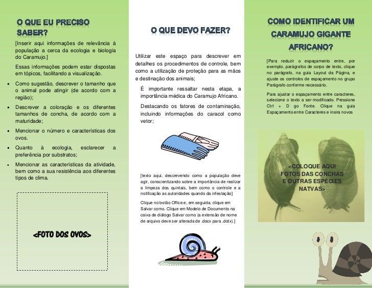 Modelo Folder Conexão Caramujo Slide 2