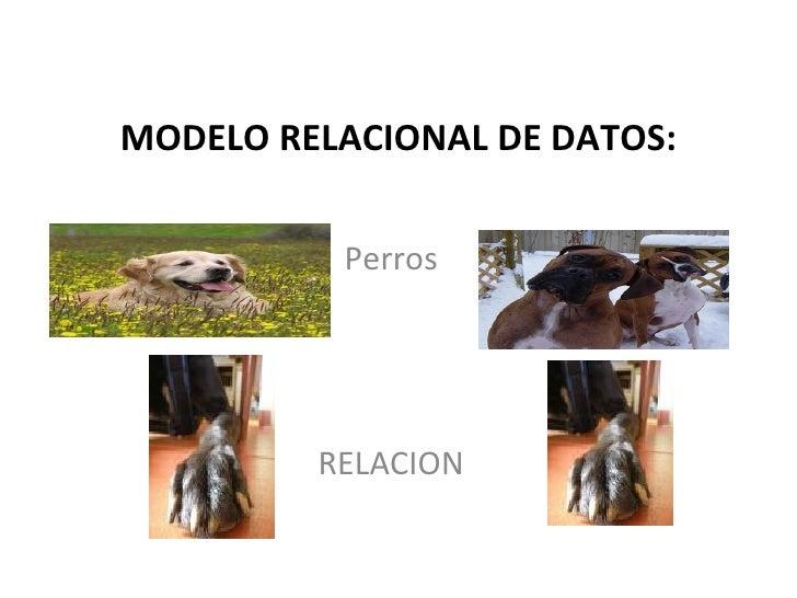 MODELO RELACIONAL DE DATOS: Perros RELACION